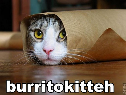 Thank you, Burrito kitteh